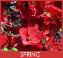 Stanthorpe in Spring, find out more...