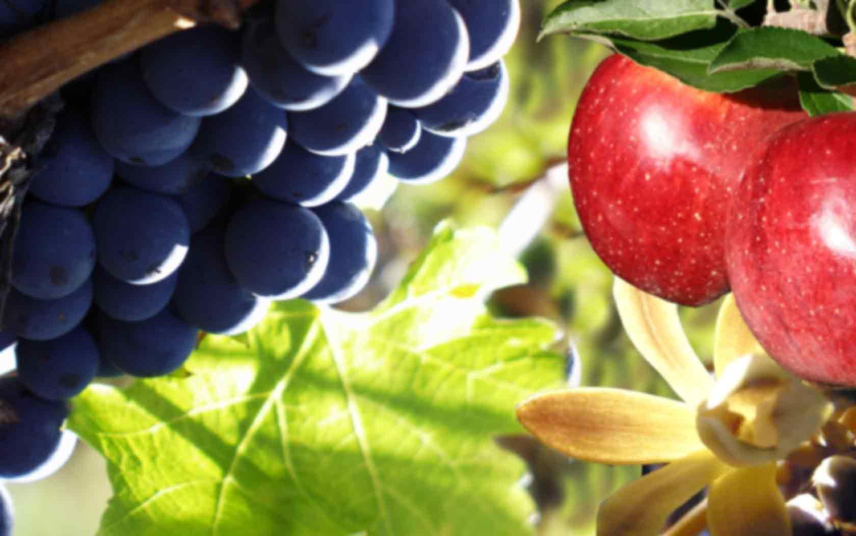 stanthorpe accommodation wineries and restaurants icaredatatools